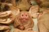 China's pork shortage to last another year or two - GIRA analyst